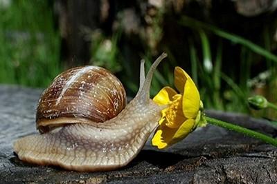 escargot-4341701