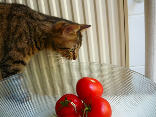 tomatometrobius